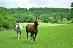HorsesLandListing
