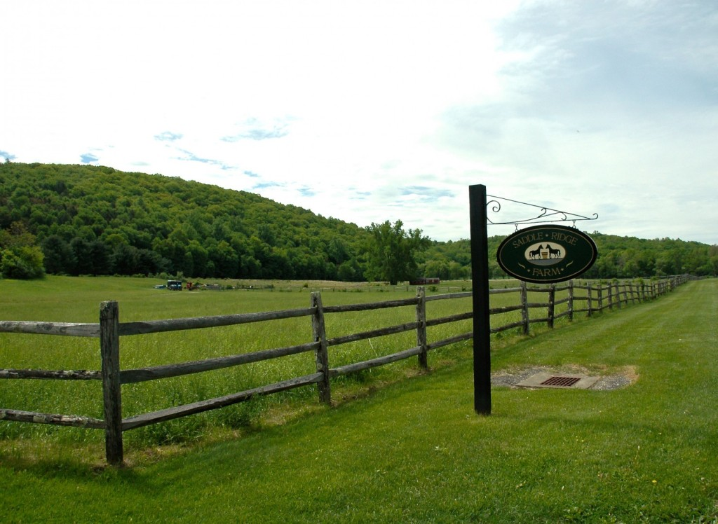 Saddle Brook Farm