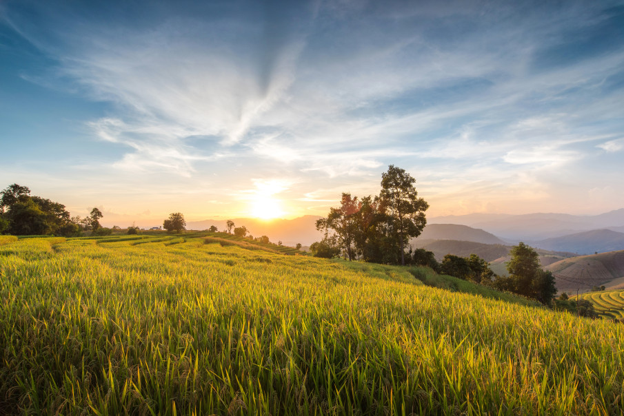 image of a sunset over a golden field