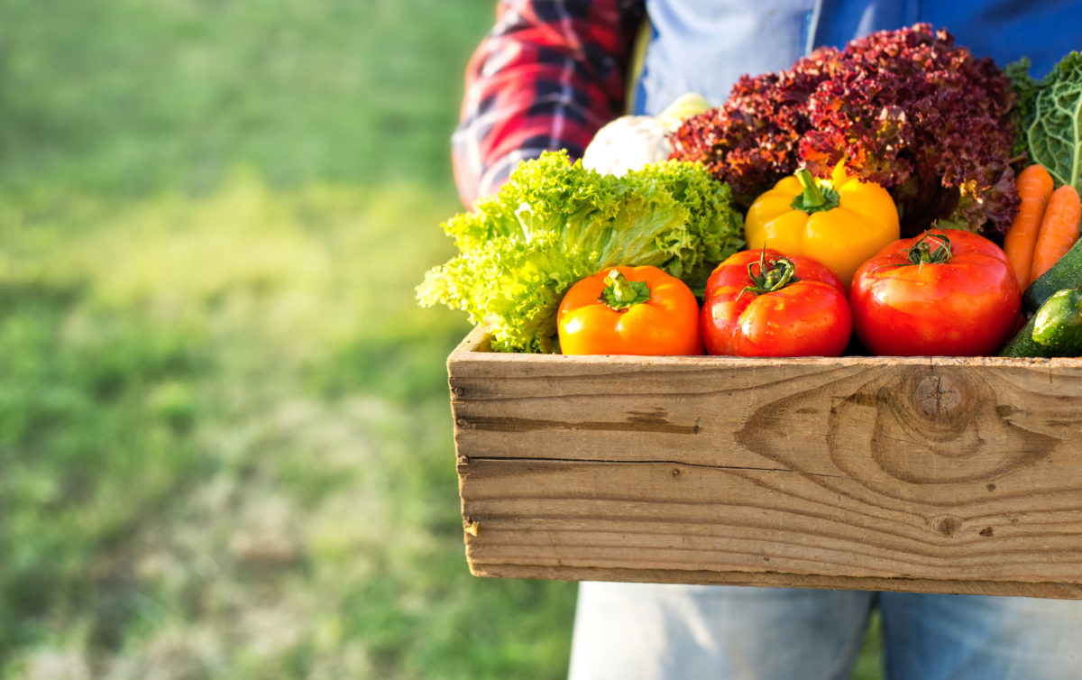 farmer holding box with fresh organic vegetables